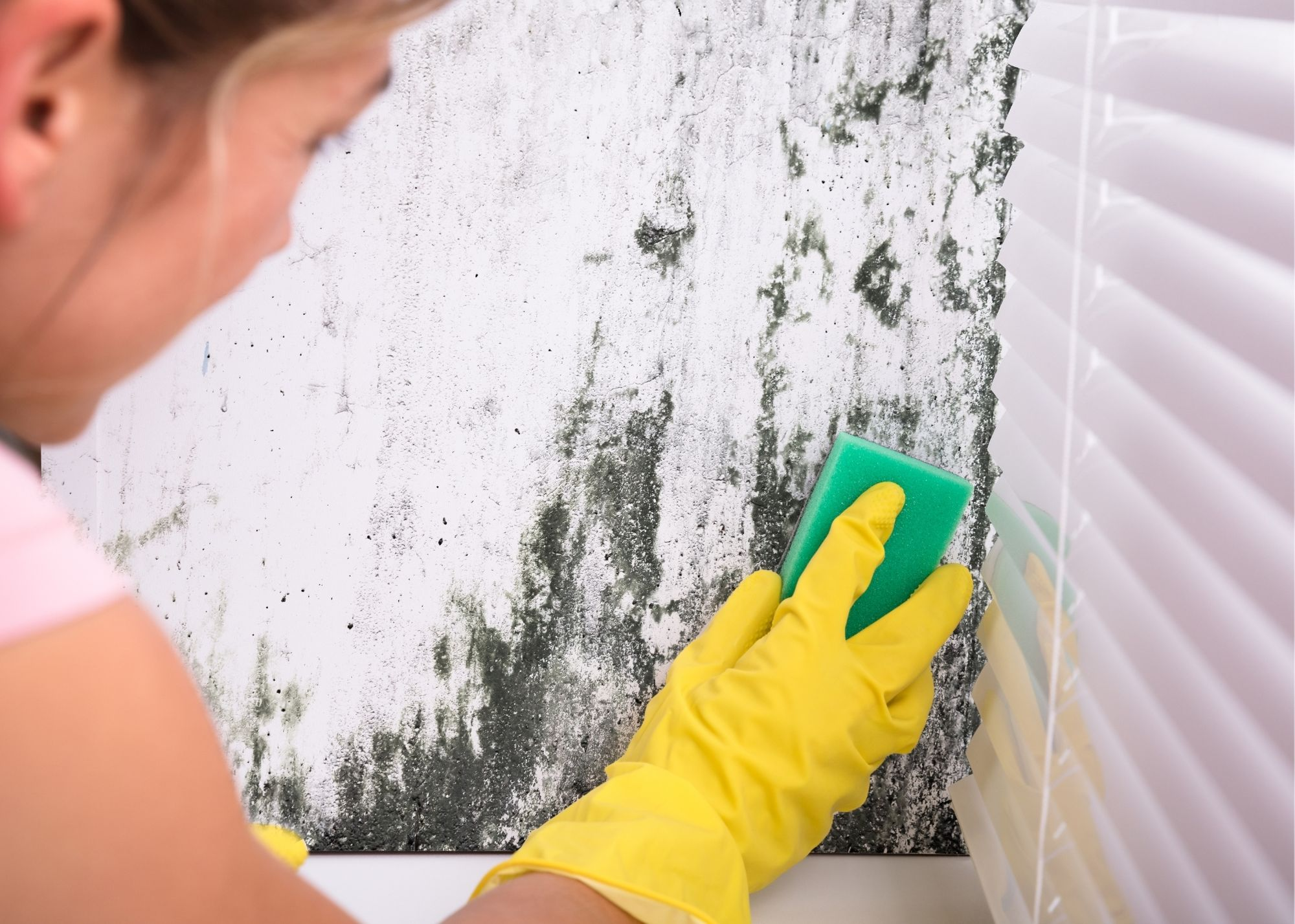 mold removal in Houston TX